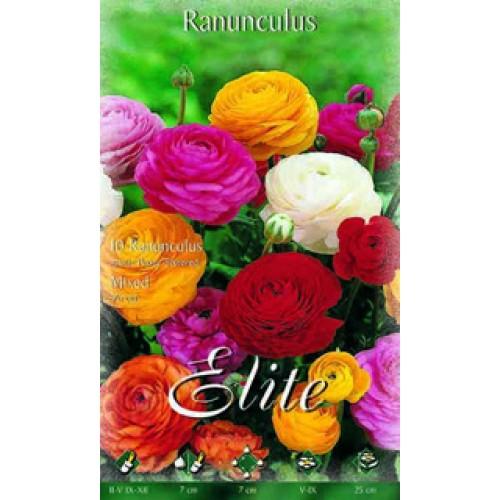Купить цветы садовые в спб