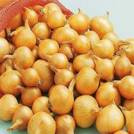 Лук Golden Gourmet шалот /250 г/