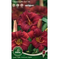 Лилейник (хемерокалис) Dark Red /1 корневище/ *Florex*